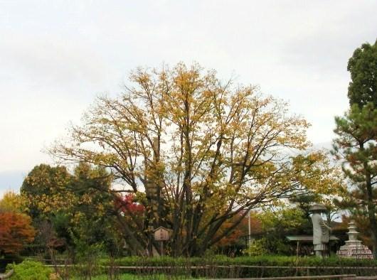 池田、光明・乙訓寺 186
