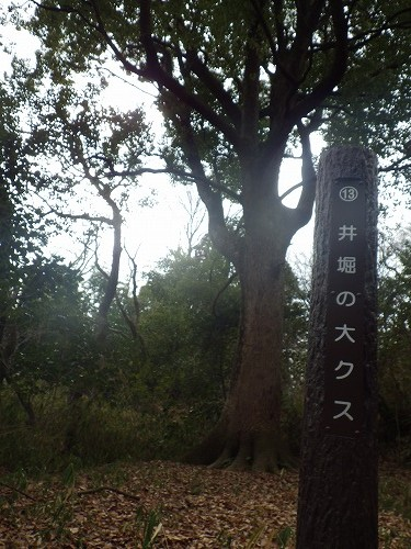 猪高緑地 (5)