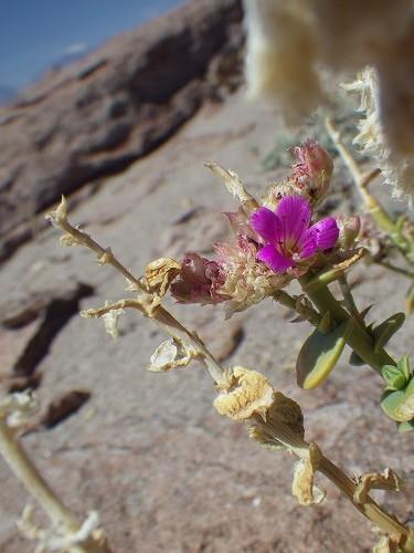 Atacama3dday (17)