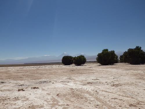 Atacama 4thday (15)
