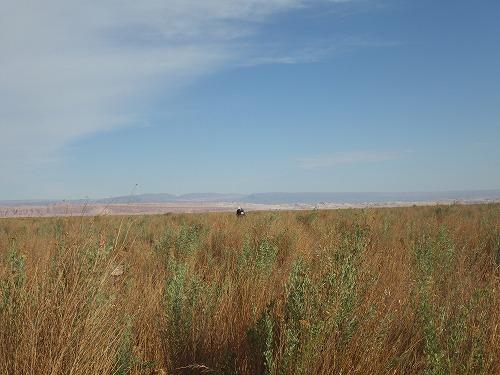 Atacama 5th day (16)