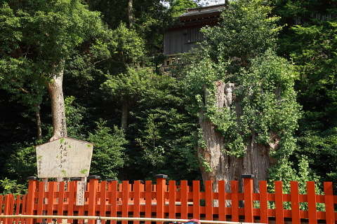 鎌倉・江ノ電5