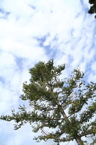 もみのき森林公園3