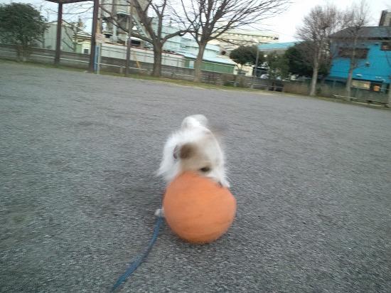 ボール拾ったヨ