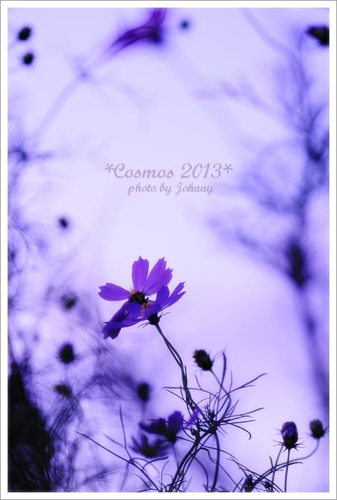 20131015-7.jpg
