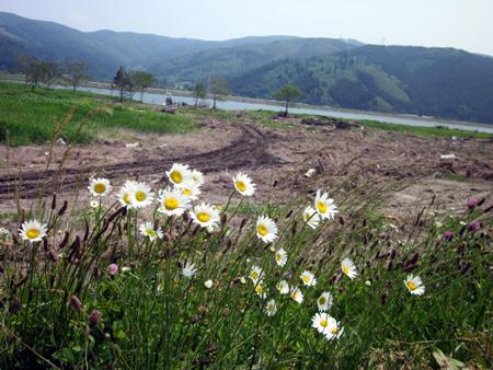 2011-06-10_12-46-07_00.jpg