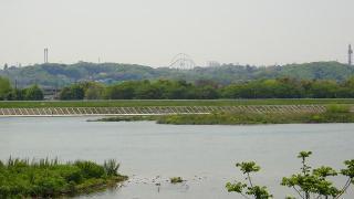 多摩川からのよみうりランド