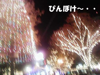 DVC00029.jpg