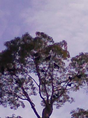 DVC00126_convert_20100207200440.jpg