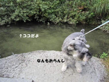 IMG_2778_.jpg