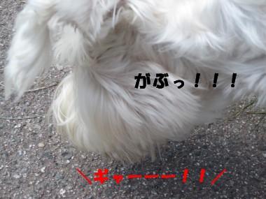 IMG_2839.jpg