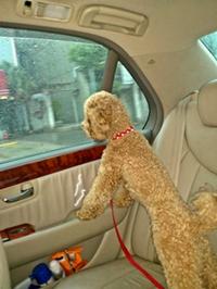 車内ジョナ2