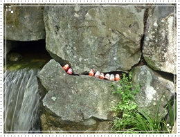 20110918勝尾寺だるま2