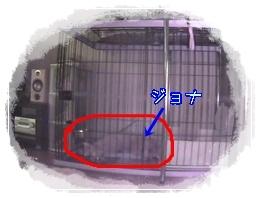 見守りカメラ(ゲージ)