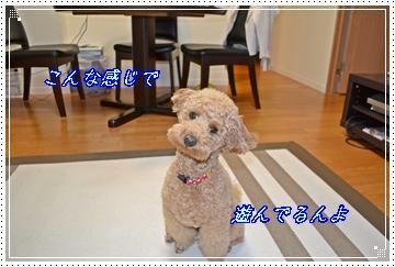 DSC_0146_ァ