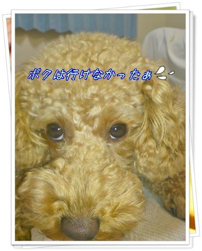 DSC_0740_20111022234256.jpg