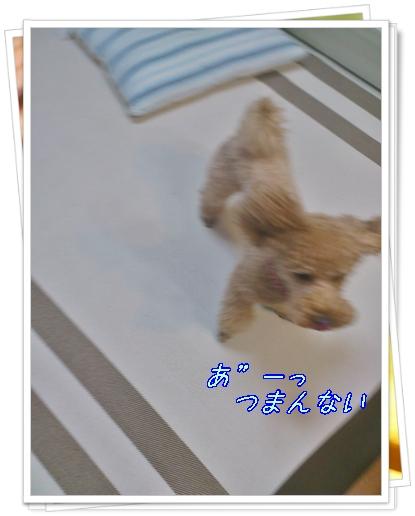 DSC_0751_20111022234256.jpg