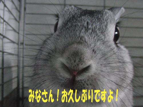 元気ですよ!