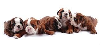 dog30_20110506141412.jpg