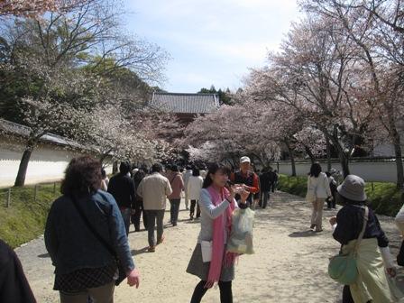 20100404奈良 011
