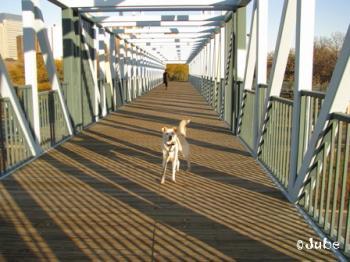 bridge1110