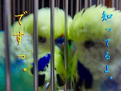 隣の「小松菜」は青い?5