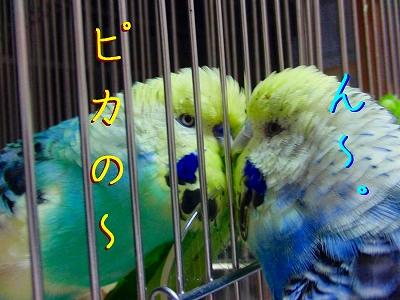隣の「小松菜」は青い?4