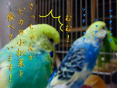 隣の「小松菜」は青い?1