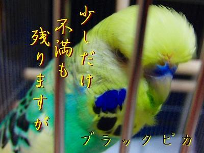 隣の「小松菜」は青い?8