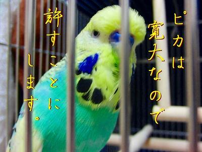 隣の「小松菜」は青い?7