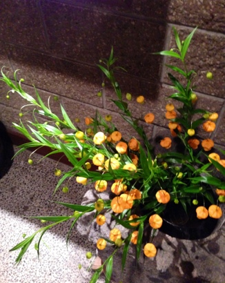 fc2blog_20130308200937dae.jpg