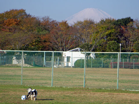 富士山は買える?