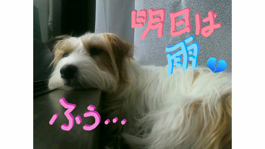 moblog_485daa9a.jpg