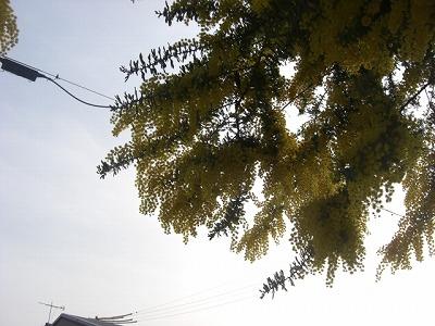 CIMG3308.jpg