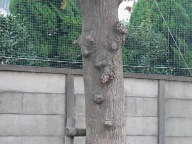 顔のある木