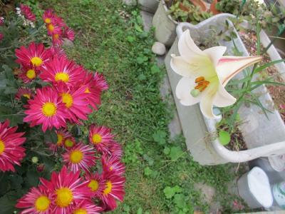 高砂百合と菊