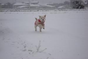 2010雪3