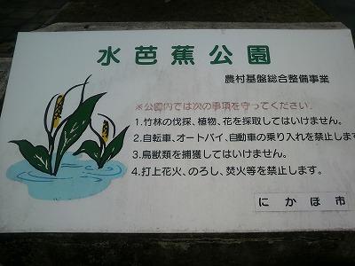 釜ヶ台 水芭蕉公園6