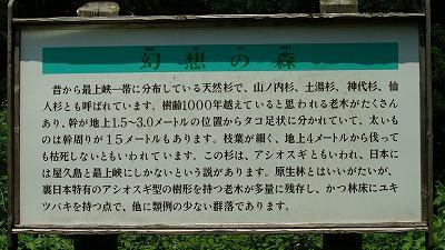 幻想の森01