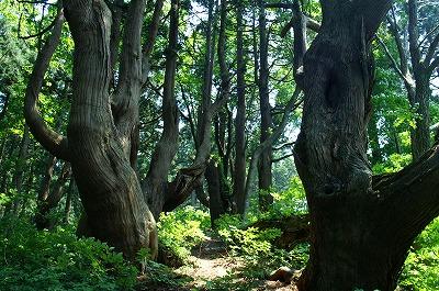 幻想の森03