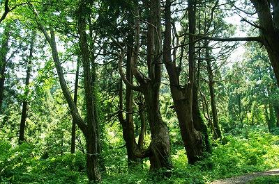 幻想の森24