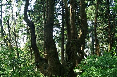 幻想の森008