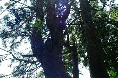 幻想の森017