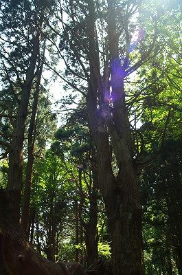 幻想の森0082