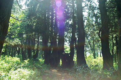 幻想の森083