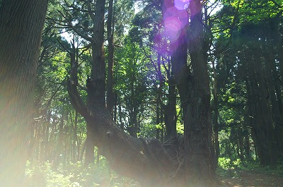 幻想の森081