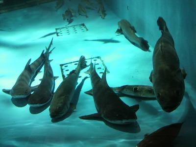 加茂水族館61