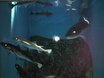 加茂水族館362