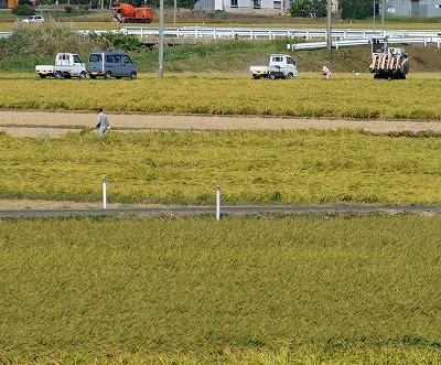 稲刈り003