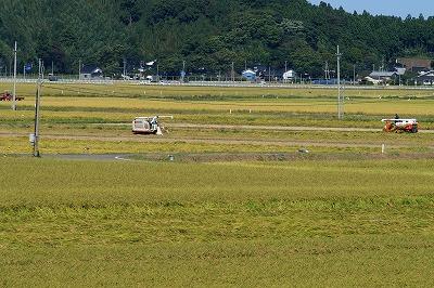 稲刈り006